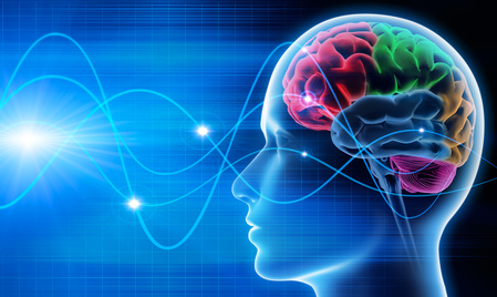 illustration cerveau ©copiright fotolia